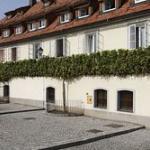 Der älteste (tragende) Weinstock der Welt - die stara trta in Maribor